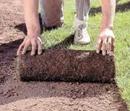 sod and seeding